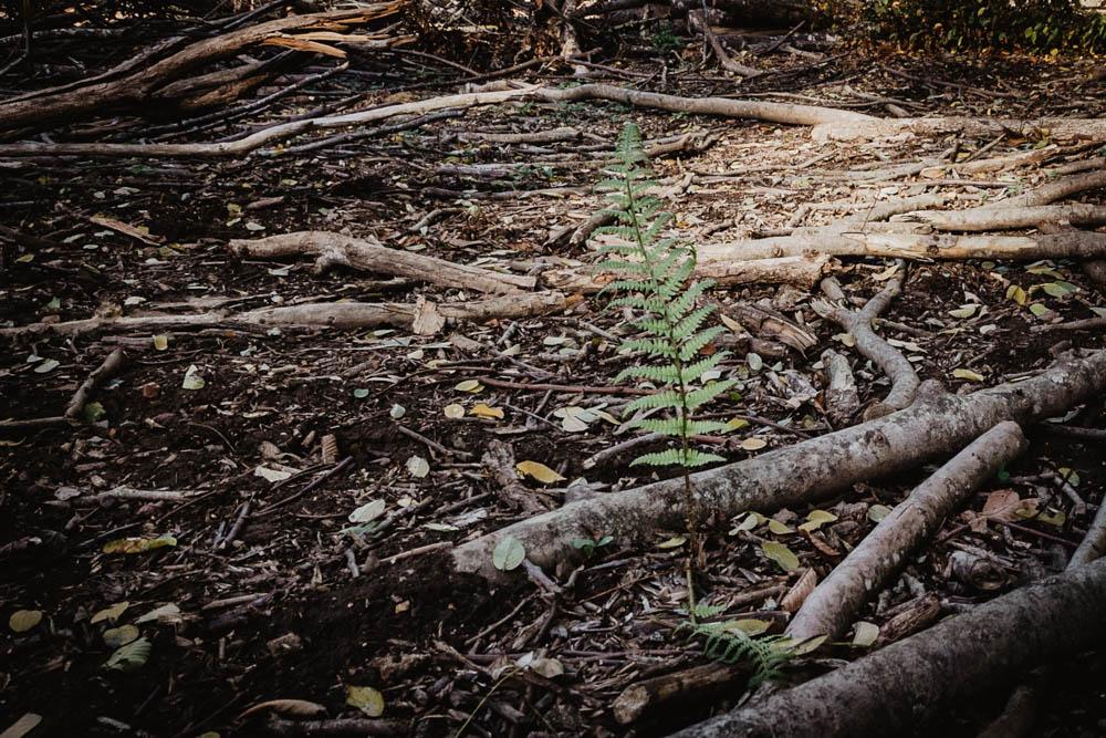 wood - bois - foret - forest - love session - engagement session - seance engagement - lovebirds - nature - france