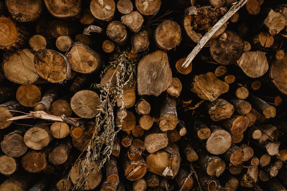 bois - tronc - arbres - foret - nature - automne - photographe - orne - mariage - eure et loir - wood